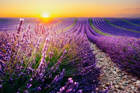 Lavender at sunrise - sky, flowers, lavender, sunrise, beautiful, landscape, field