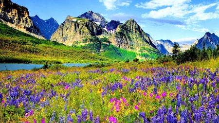 Colorado Mountains - flowers, sky, landscape, lupines, clouds