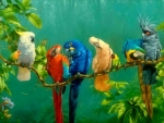 Colorful Birds On Branch