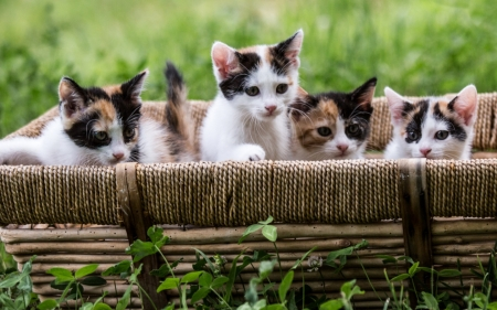 Kittens - kittens, cats, basket, animals