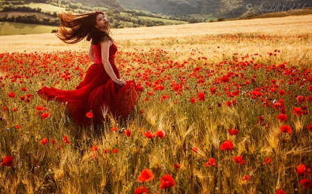 Poppy Field - beauty, girl, field, poppies, wind
