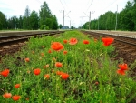 Flowering Railway