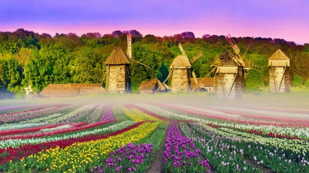 Museum of architecture in Pirohovo - tulips, beautiful, antiquities, architecture, colorful, museum, Kiev, mill, Ukraine, capital, flowers