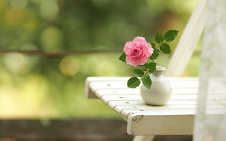 Pink Rose - flower, chair, pink, rose