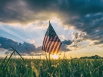 American Flag in the Field
