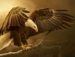 Magnificent Eagle