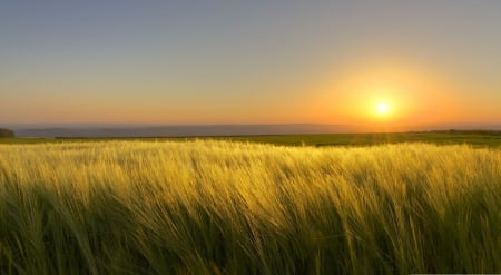 End of a sunny day - landscape, scene, meadow, field, dawn, dusk, sunset, wallpaper, summer, nature, sunrise