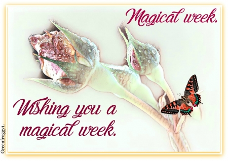 MAGICAL WEEK - WEEK, COMMENT, MAGICAL, CARD