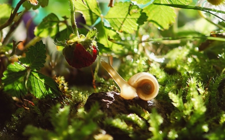 Snail and Strawberry - nature, strawberry, snail, animal, macro