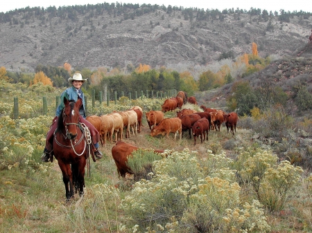 The Cows Come Home - brunettes, hats, ranch, cowgirls, cattle, herd, horses