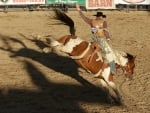 Manly Bronc Rider at Rodeo