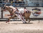 Real Cowgirl Trick Rider at Rodeo
