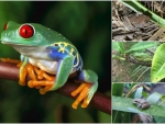 FROG COLLAGE