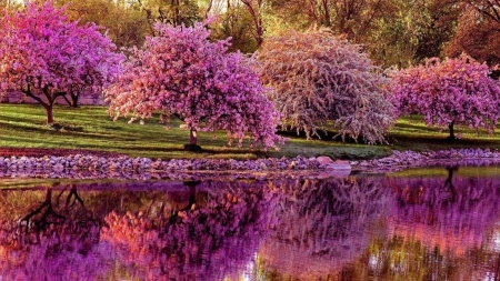 Spring Reflections - blossoms, water, pink, trees