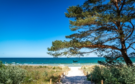 Beach in Germany - beach, tree, germany, sea