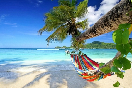 Place to rest - beach, palm, hammock, sea, sky