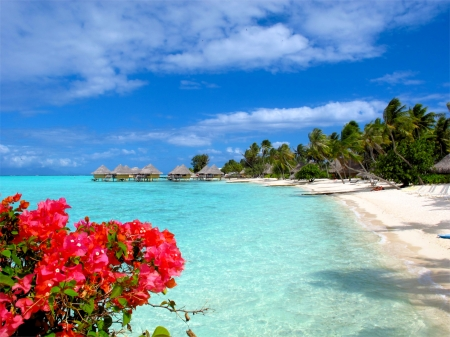 Beach of Bora Bora - sea, palms, indonesia, flowers, clouds, sky