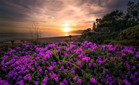 the splendor of dawn - beach, flowers, dawn, sky