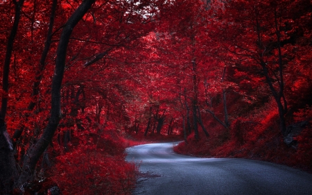 Red Forest - Forest, Trees, Red, Hillside, Bark, Shadows, Road