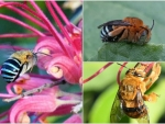 INSECT COLLAGE