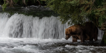 Searching For Dinner - Rocks, Bear, Water, Trees, Wildlife, Waterfall