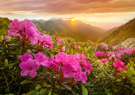 Morning in mountains - sun, view, wildflowers, beautiful, sunrise, morning, sky, mountain, rays, flowers