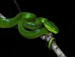 Beautiful green snake