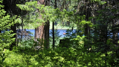 Bull Prairie lake - trees, kayak, pcwallpaper, forest, water, green, wallpaper