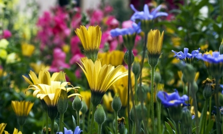 Colorful Garden - flowers, garden, colorful, nature