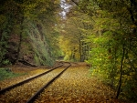 Train tracks - scenic photography