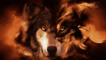 Wolf's Determination - Red Background, Fire in his eyes, Orange, Beautiful, Dark, Wolf, Stare, Fire, Brown and Red Hues
