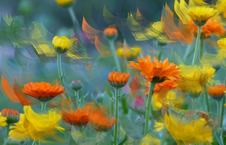 Flower Fantasy - colorful, flowers, buds, field