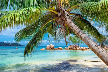 Tropical beach in Paradise island - island, tropical, palms, rest, exotic, vacation, ocean, sea, turquoise, beach, paradise, summer, sands
