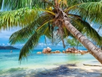 Tropical beach in Paradise island