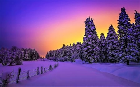 Sunset Behind The Pines - nature, sunset, pines, winter, snow