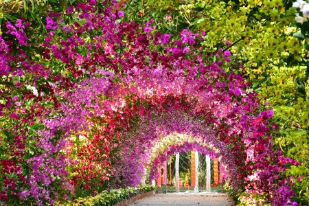 Orchid tunnel - colorful, arch, orchid, flowers, summer, park, beautiful, tunnel, garden