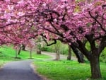 Park trees in blossom