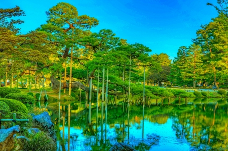 Pond in the Park - park, nature, reflection, pond, japan, trees