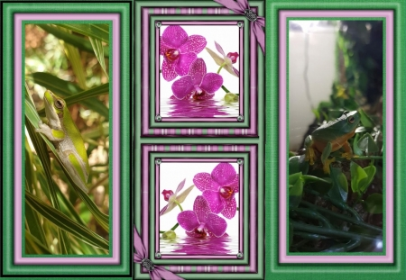 FRAMED FROGS - FROGS, NATURE, IMAGE, FRAMED