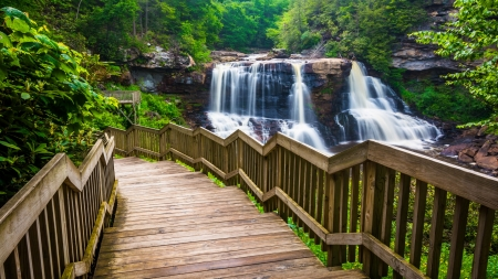 Blackwater Falls State Park - water, cascades, view, black, beautiful, park, state, forest, rocks, waterfall