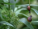 Snails on Plant