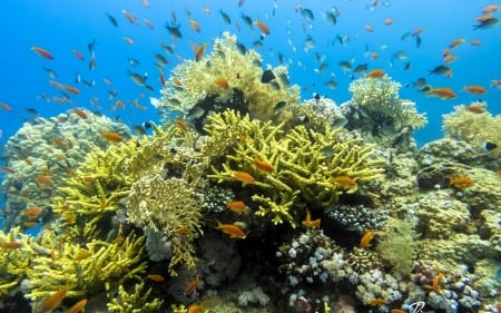 Coral Reefs in Egypt