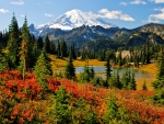 Fall Colors at Mount Rainier, Washington