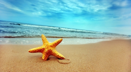 Starfish on the sand - nature, animals, starfish, wild animals, fish, beach, seashore, wallpaper, wild, wildlife, summer, tropical