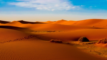 Desert safari Dubai Deals - sand, dune bashing, desert safari, desert safari deals