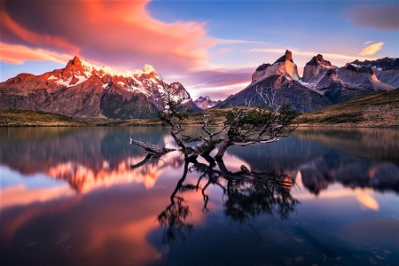 Torres del Paine - lake, mountains, chile, tree, tree lake