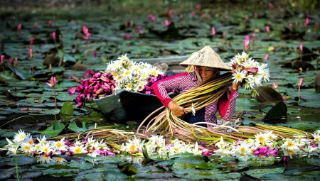 waterlilies - pond, harvest, woman, water lilies