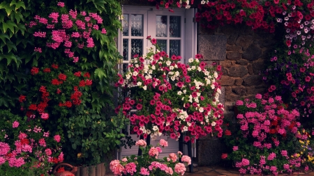 Blooming Wall - colors, blossoms, house, window