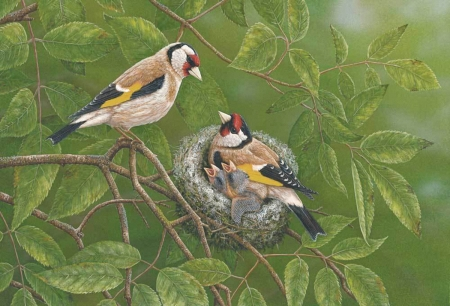 Finches at Nest