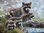 Mother Raccoon